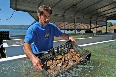man with a basket of oysters